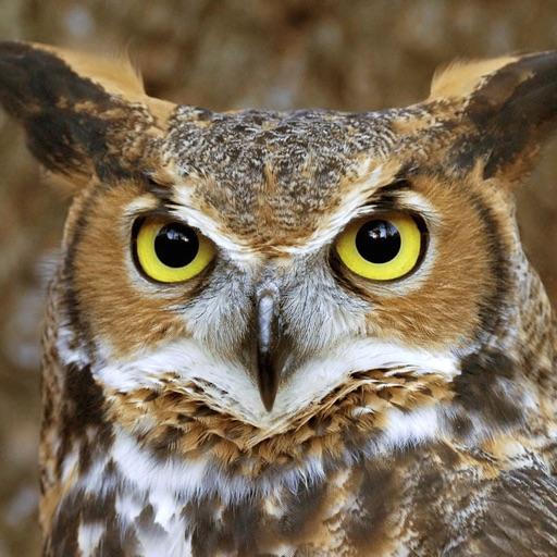 Owls Expert