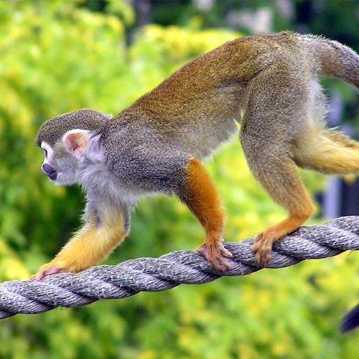 Primate Species: Monkeys, Gorillas, Lemurs & Macaques