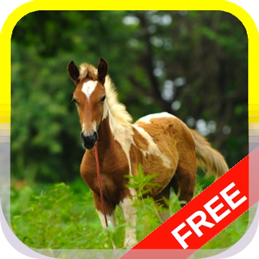 Little Pony Puzzle HD
