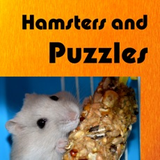 Activities of Hamsters And Puzzles