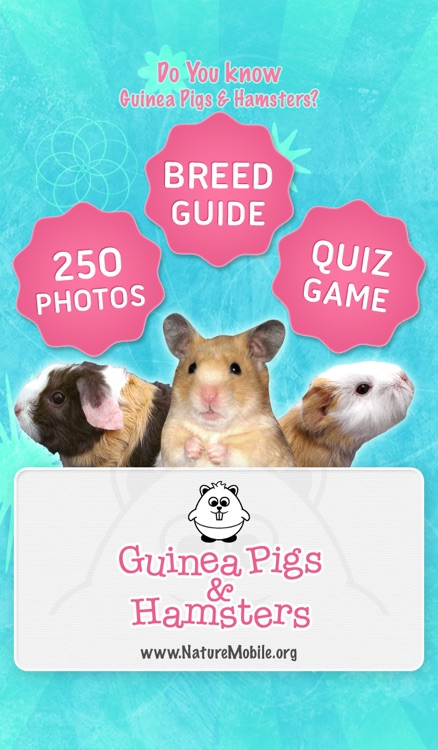 Ginny Pigs and Hamsters - Breed Guide and Quiz Game