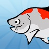 Karl the Koi - Who is the greatest fish in the pond?
