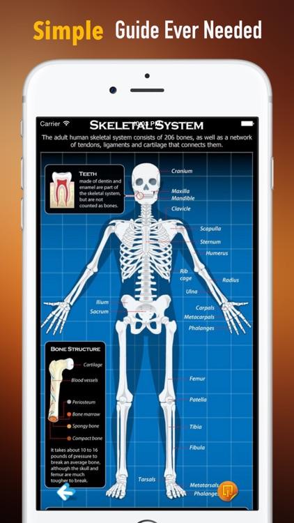 Bone Identification:Human and Nonhuman
