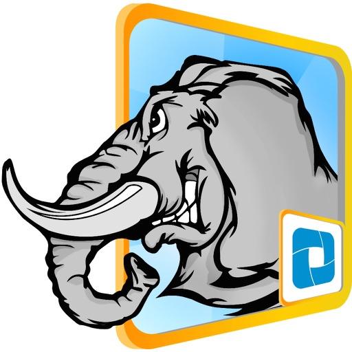 Đấu voi