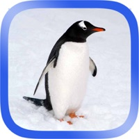 Codes for Arctic Animals Puzzle Hack