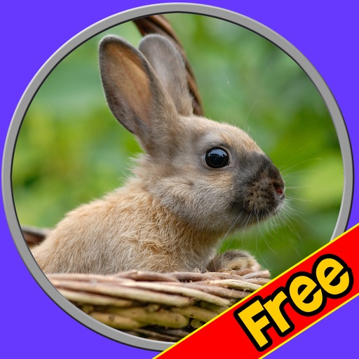 beautiful amazing rabbits for kids free