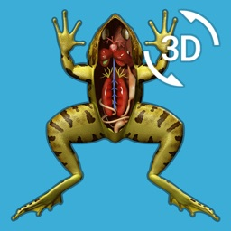 Visual Anatomy - Frog