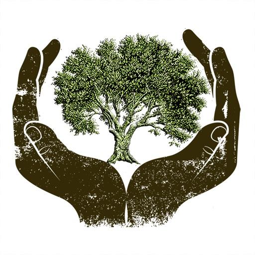Olive Tree Production