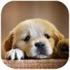 可爱小狗对对碰-免费经典单机天天消消乐,休闲益智全民爱消除