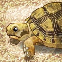 Tortoise Aquarium Free