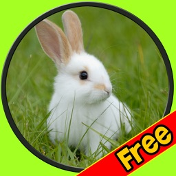 exceptionnal rabbits for kids free