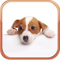 Codes for Dog Breeds Trivia Quizzes Hack