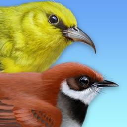 iBird Hawaii & Palau Guide to Birds