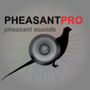 REAL Pheasant Calls & Pheasant Sounds for Pheasant Hunting