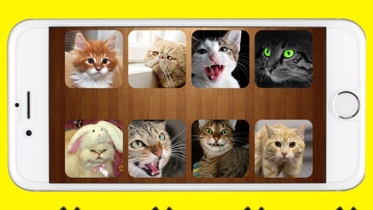Cats Sounds Game