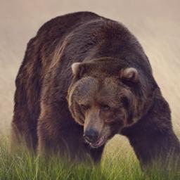 Bear Sounds!