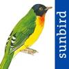 All Birds Venezuela - a complete field guide to identify all the bird species recorded in Venezuela