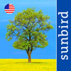 Tree Id USA - identify over 1000 of America's native species of Trees, Shrubs and Bushes - Mullen & Pohland GbR Cover Art