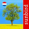 Boom Id Nederland - identificatie gids voor bomen