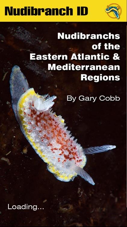 Nudibranch ID E Atlantic Med
