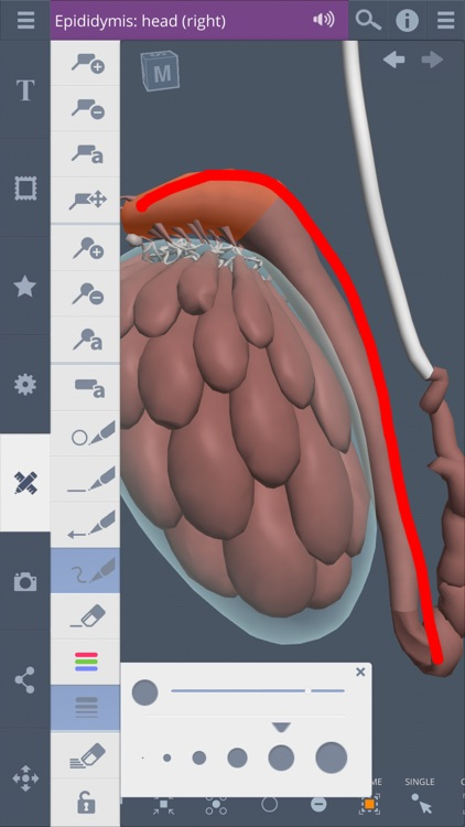 Male Pelvis: 3D Real-time screenshot-4