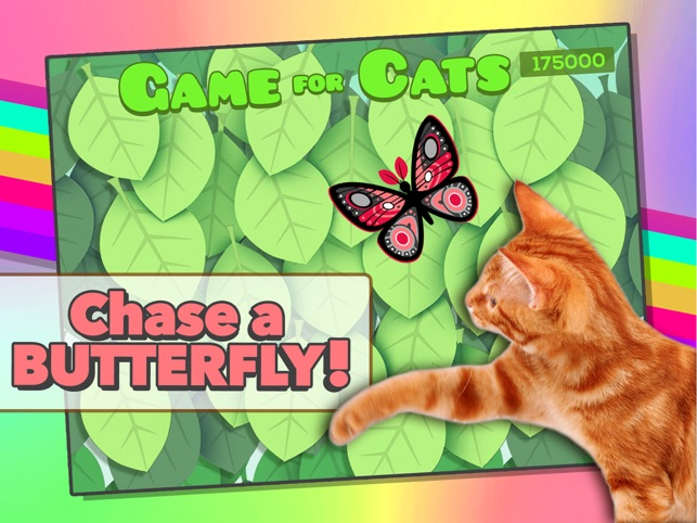 game for cats on the app store