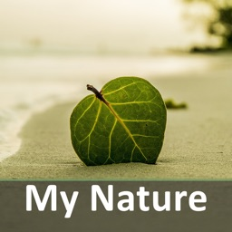 My nature sounds & relax music