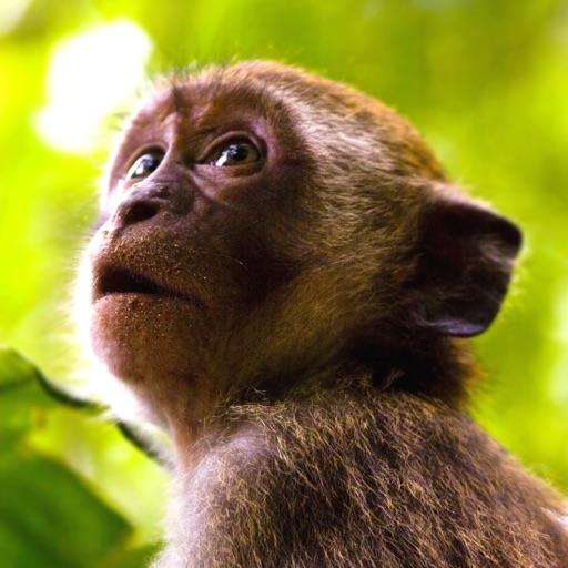 Monkey Sounds!