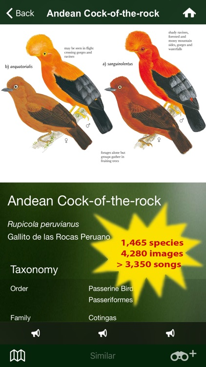 All Birds Northern Peru - a field guide to all the bird species recorded in this region of South America
