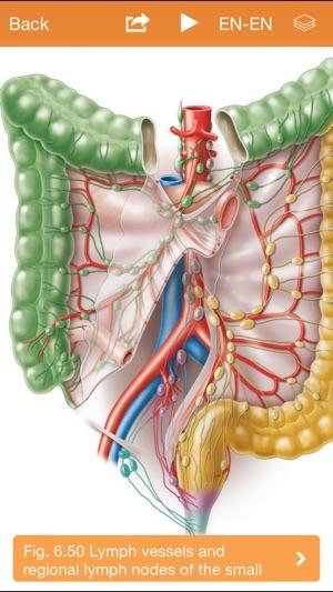Sobotta Anatomy Atlas Free on the App Store