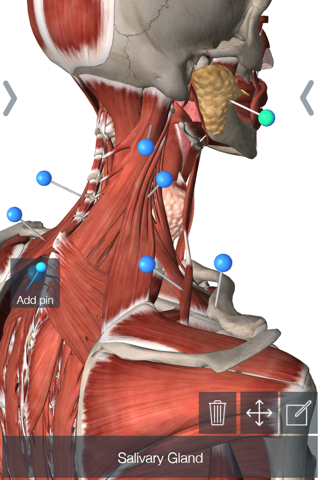 Essential Anatomy 5 screenshot 1