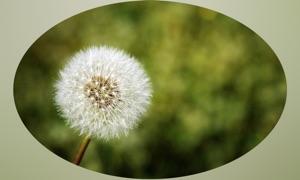 Plants Wiki