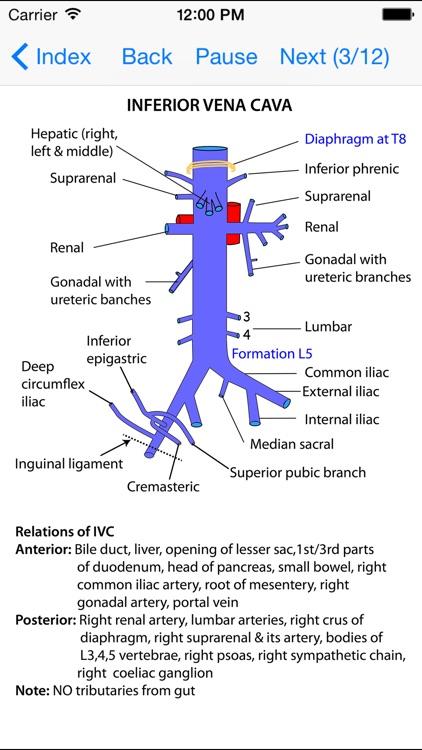 Anatomy Lectures Thorax and Abdomen screenshot-4