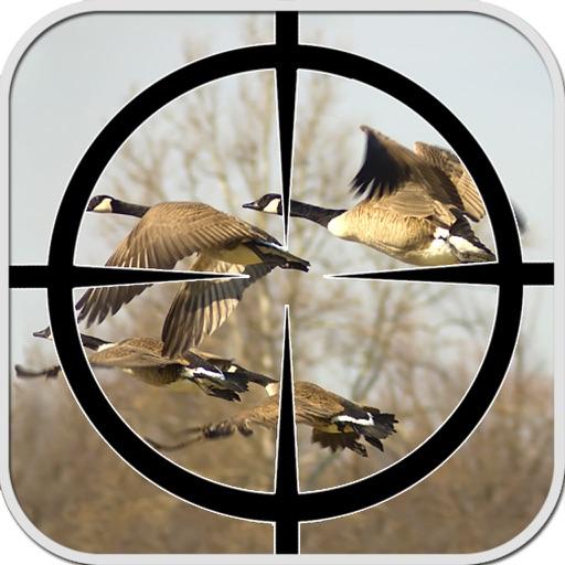 Birds Sniper Hunting 2016
