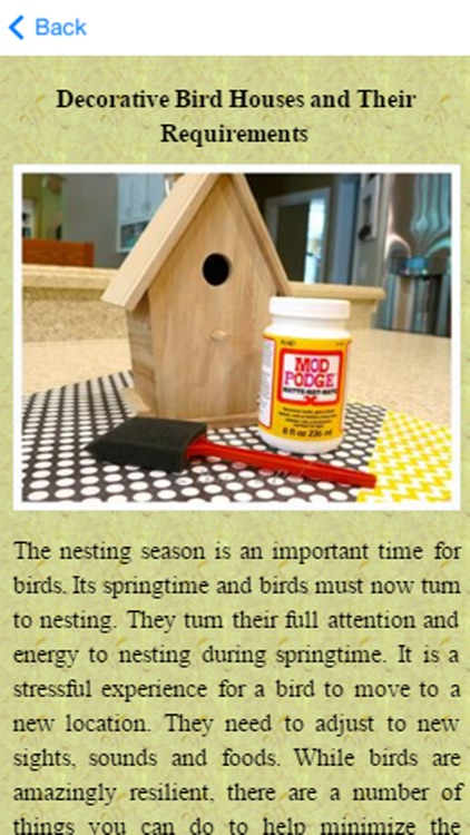 Build A Birdhouse Today