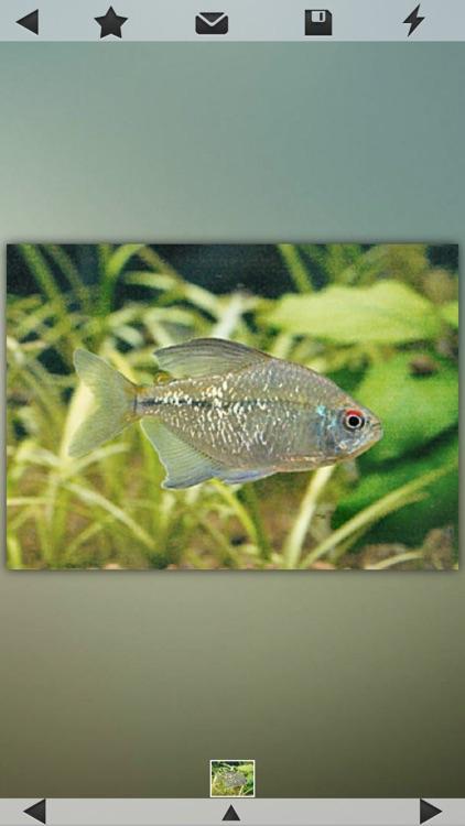 Fish Collection screenshot-3