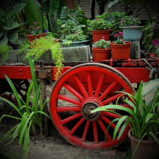 Ornamental Plants Collection