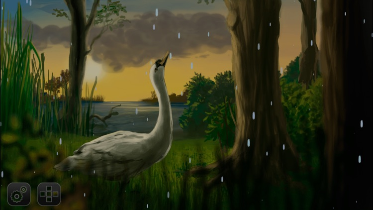 Where Do Swans Sleep? picture story book app for kids screenshot-3