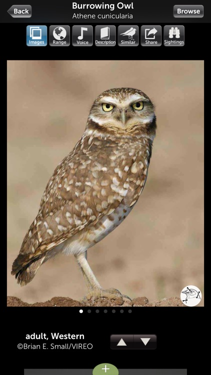 Audubon Owls Guide screenshot-2