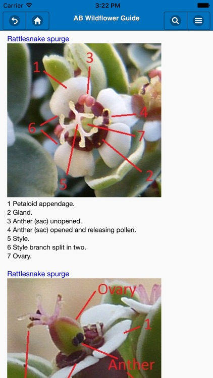 Anza-Borrego Wildflower Guide screenshot-1