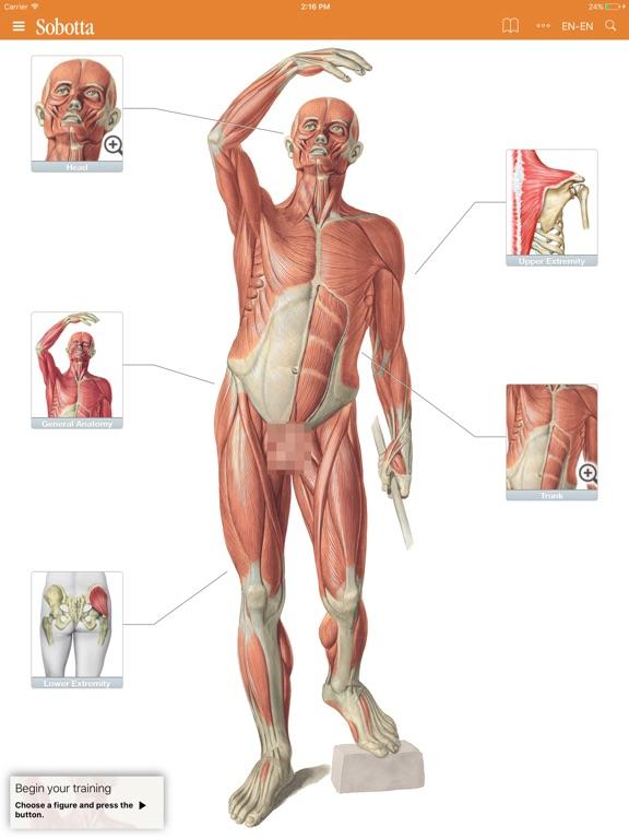 Sobotta Anatomy Atlas App Price Drops