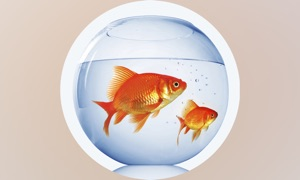 Fish Fresh Water Info
