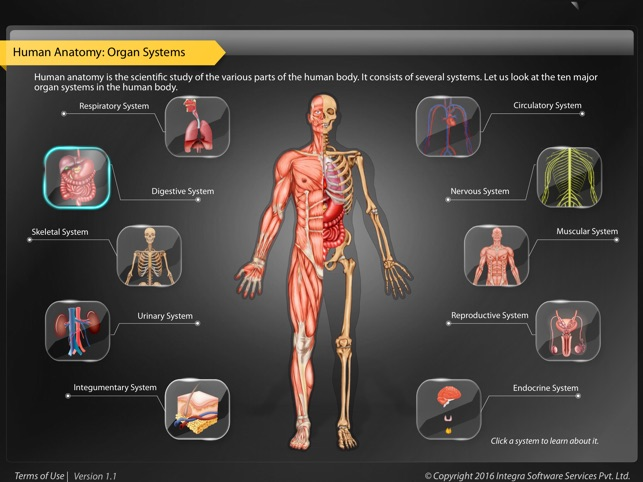 Human Anatomy Explorer Digestive System On The App Store