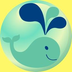 dolphin show ball
