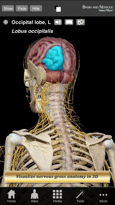 Brain and Nervous Ana... screenshot1