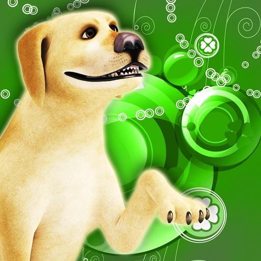 Dog Poo!