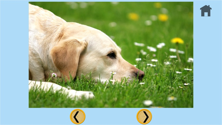 captivating dogs for kids - no ads screenshot-4