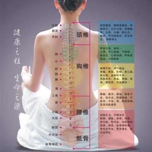 脊柱图解 - 脊柱相关疾病图解大全