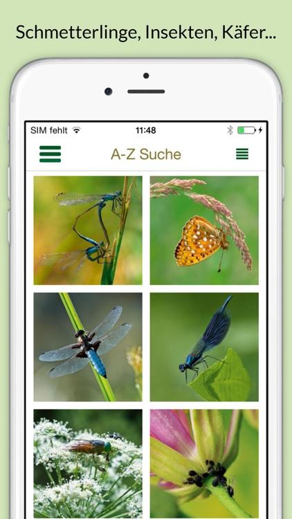 Insekten & Schmetterlinge bestimmen – entdecken Sie die 100 wichtigsten Arten in der Natur und im eigenen Garten