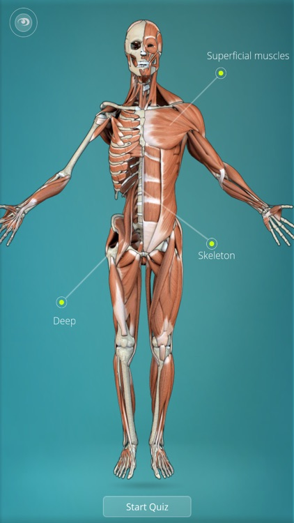 Anatomy Quiz - muscles and bones screenshot-0